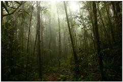 Serra da Bocaina. Clique para ampliar. Foto: Foco na Natureza - Todos os direitos reservados