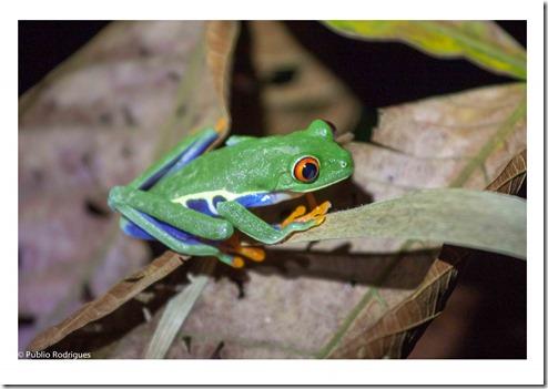 Costa Rica-022