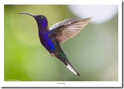 Costa Rica-063