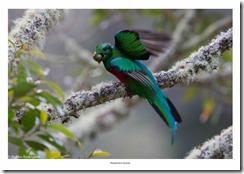 Costa Rica-114