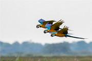 Pantanal Nhecolândia – Refúgio Ecológico Araraúna